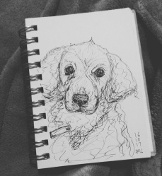 Day 16-Four Legged Friend